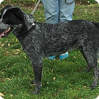 Adopt A Pet :: Huxley - Texico, IL
