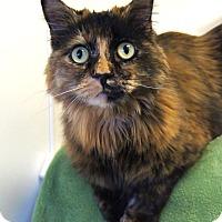 Adopt A Pet :: Summer - Colorado Springs, CO