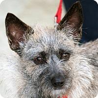 Adopt A Pet :: Karma - Palmdale, CA