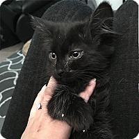 Adopt A Pet :: Luna - Bakersfield, CA