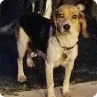 Adopt A Pet :: Selena - Rockville, MD