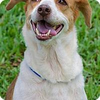 Adopt A Pet :: Penelope - Miami, FL