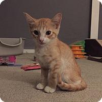 Adopt A Pet :: Mateo - Los Angeles, CA