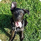 Adopt A Pet :: Beautiful Lucille - Adoption Pending!