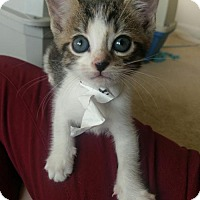 Adopt A Pet :: Sora - Herndon, VA