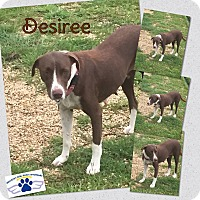 Spaniel (Unknown Type) Mix Dog for adoption in Folsom, Louisiana - Desiree