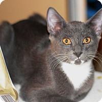 Adopt A Pet :: Maddox - West Palm Beach, FL