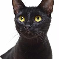 Adopt A Pet :: Jackie - Dublin, CA
