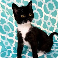 Adopt A Pet :: Payton - Hornell, NY