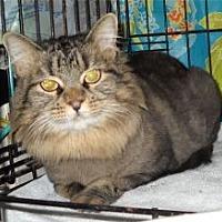 Adopt A Pet :: CA - Kayla (MCR) - Gainsville, GA
