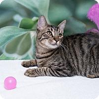 Adopt A Pet :: Vester - Houston, TX