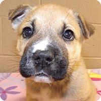 Adopt A Pet :: Brantley - Oxford, MS
