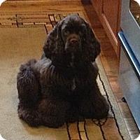 Adopt A Pet :: Charlie Brown - Albany, NY