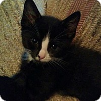 Adopt A Pet :: Stigman - Fairbury, NE