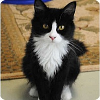 Adopt A Pet :: Abbey - Palmdale, CA