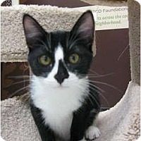 Adopt A Pet :: Pickles - Brea, CA