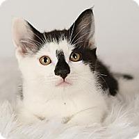 Adopt A Pet :: Presley - Eagan, MN