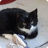 Adopt A Pet :: Nicholas -Adoption Pending! - Colmar, PA
