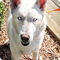 Adopt A Pet :: Alfredo - Gainesville, FL