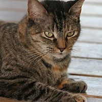 Adopt A Pet :: Damara - North Fort Myers, FL