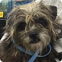 Adopt A Pet :: Puglette - Orlando, FL