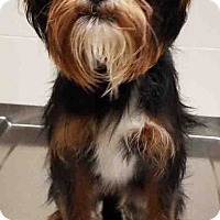 Adopt A Pet :: ADOPTED!!!   Dexter - Channahon, IL