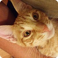 Adopt A Pet :: Radio - Tucson, AZ