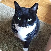 Adopt A Pet :: Leyah the Love Bug - New York, NY