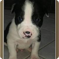 Adopt A Pet :: Male5 - Staunton, VA