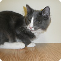Adopt A Pet :: Vaughn - Milwaukee, WI