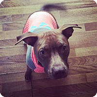 Adopt A Pet :: Natasha - Fairview Heights, IL