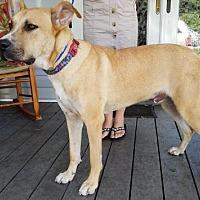 Adopt A Pet :: Broderick - Jesup, GA