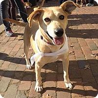 Adopt A Pet :: Bonny - Alexandria, VA