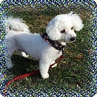 Adopt A Pet :: Adopted!!Rocco - CT - Tulsa, OK