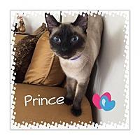 Adopt A Pet :: Prince - Royal Palm Beach, FL