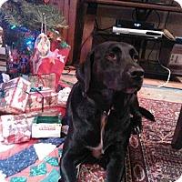 Adopt A Pet :: Dixie - Austin, TX