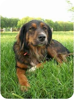 Dia -SOS | Adopted Dog | Pittsburg, KS | Irish Setter ...