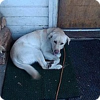 Adopt A Pet :: Bo - Chewelah, WA