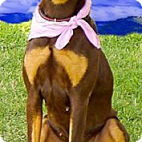 Adopt A Pet :: Gracie what a beauty - Sacramento, CA