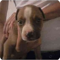 Adopt A Pet :: 3 males - Fowler, CA