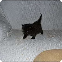 Adopt A Pet :: Love Bug - New Egypt, NJ