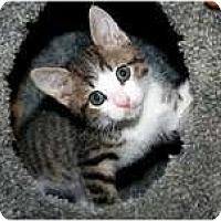 Adopt A Pet :: Parker - Arlington, VA