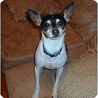 Adopt A Pet :: Kippy - Glen Burnie, MD