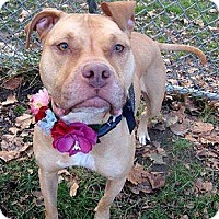 Adopt A Pet :: Dulce - selden, NY