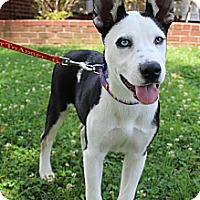 Adopt A Pet :: LiLu - Hagerstown, MD