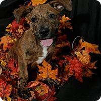 Adopt A Pet :: Brandy - Lufkin, TX
