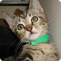 Adopt A Pet :: Leona - Miami, FL