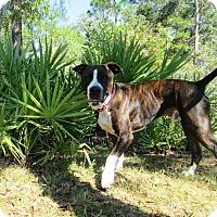 Adopt A Pet :: Moby - Orlando, FL
