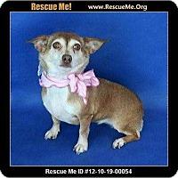 Adopt A Pet :: Pebbles - Lomita, CA