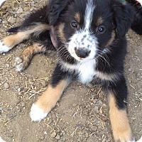 Adopt A Pet :: Puppy 2 - Temecula, CA